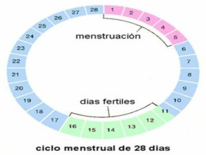 Días fertiles embarazo